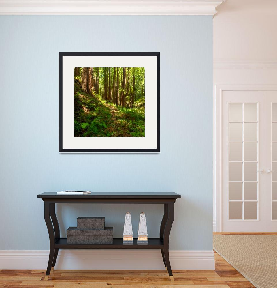 """""""Dreamy California Redwoods&quot  by mtilghma"""