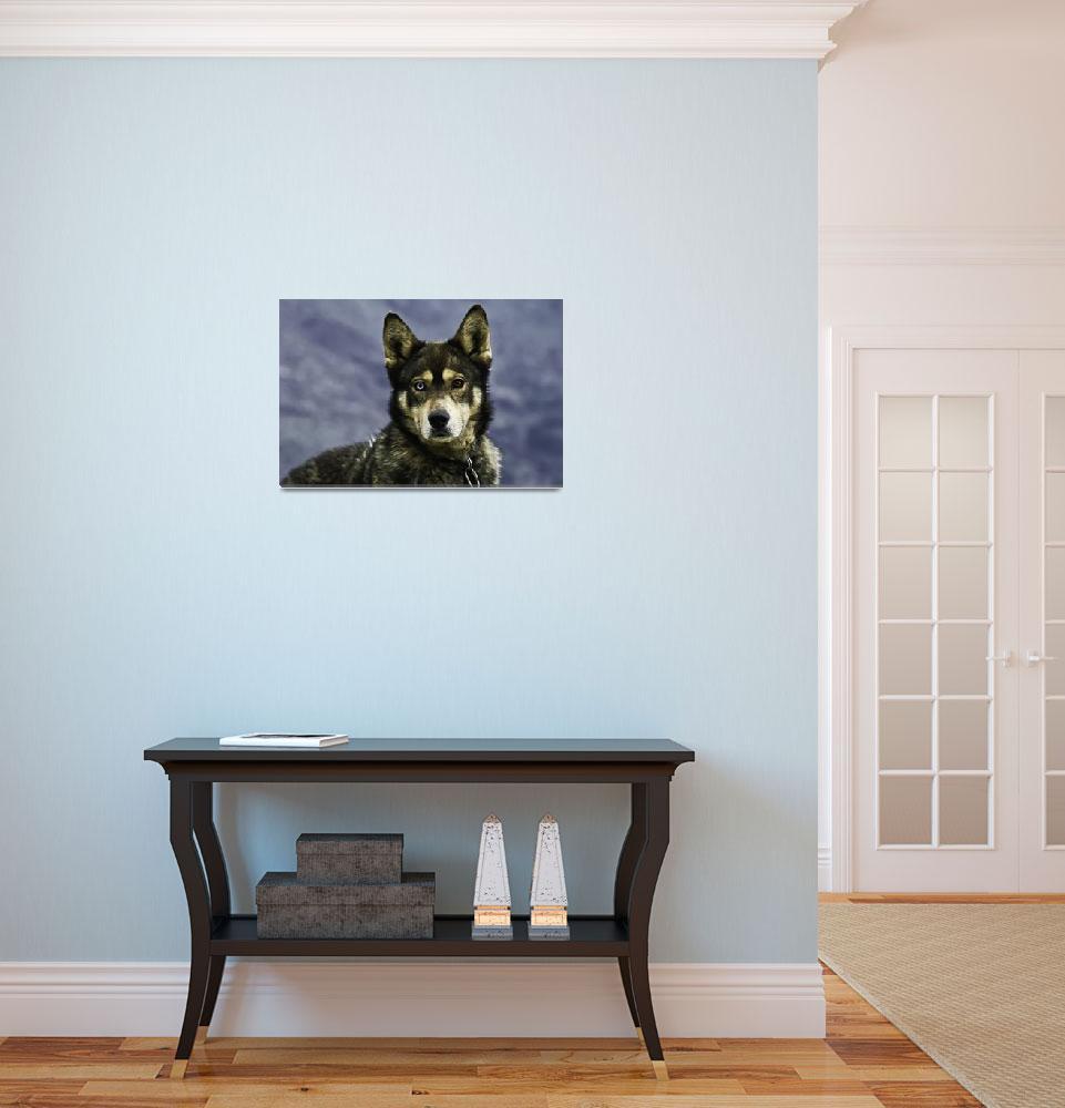 """Dual Colored Eyes Dog""  (2006) by LeonidasGR"