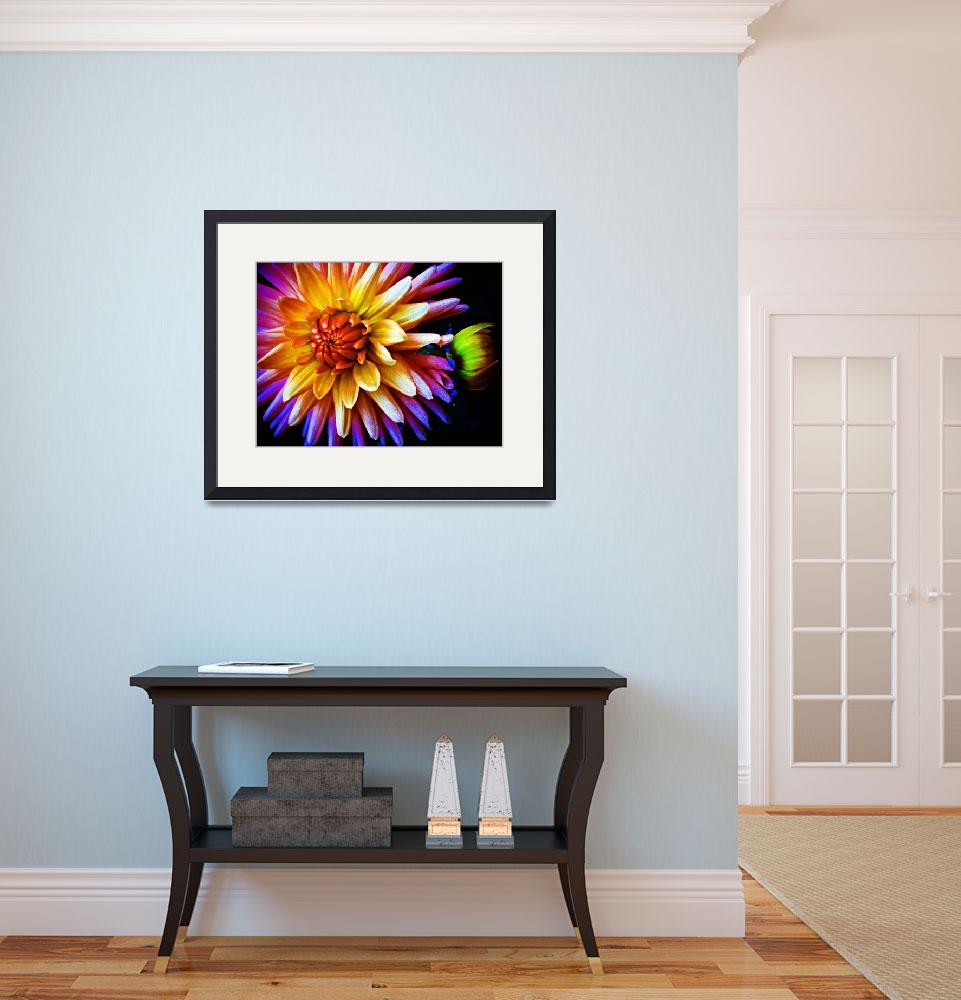 """""""Synchronicity Dahlia&quot  (2010) by SoulfulPhotos"""