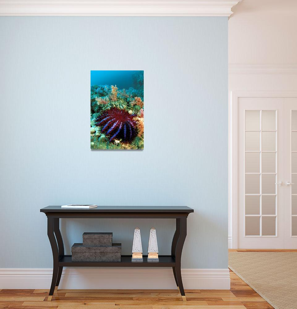 """""""Thailand, Reef Scene With Crown-Of-Thorns Starfish&quot  by DesignPics"""