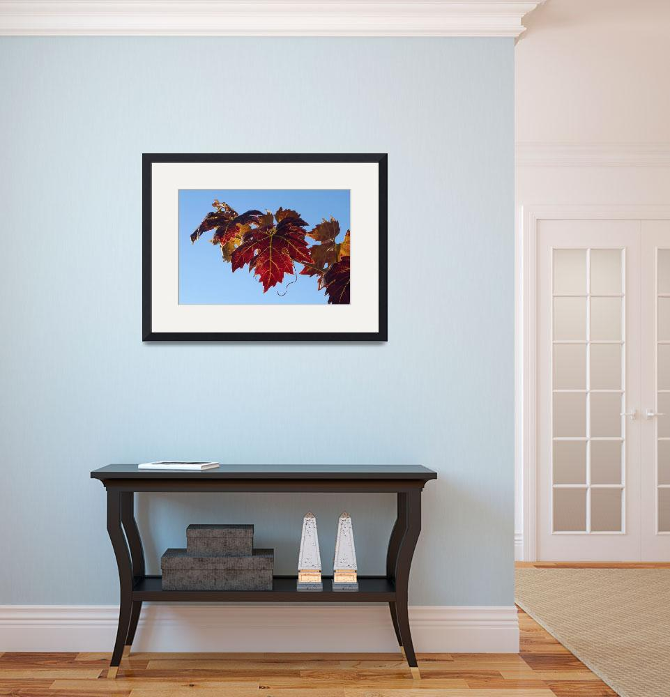 """""""Fall Wine Leaves""""  (2009) by SederquistPhotography"""