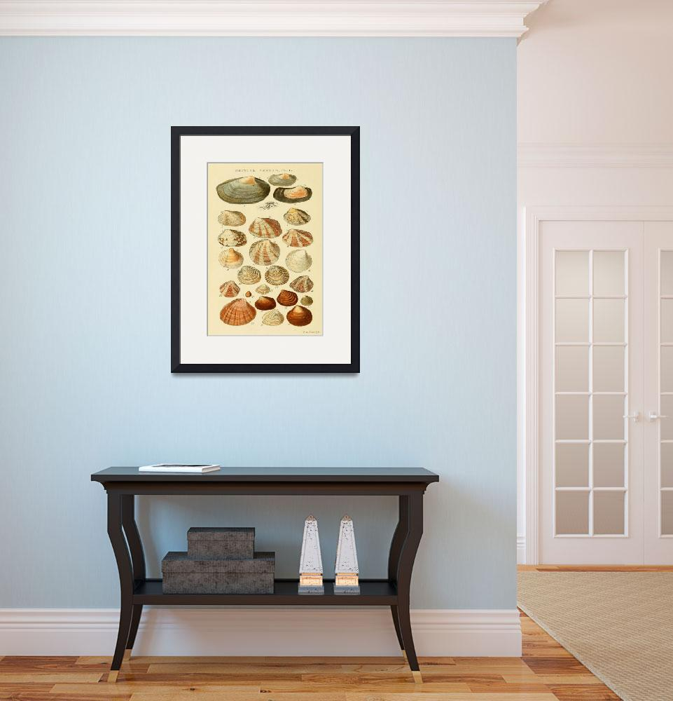 """""""Vintage Seashell Drawings&quot  by Alleycatshirts"""