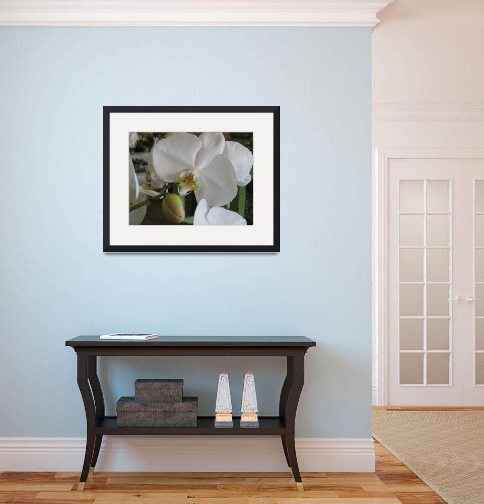 """""""White Orchid""""  by Lesleymanning"""