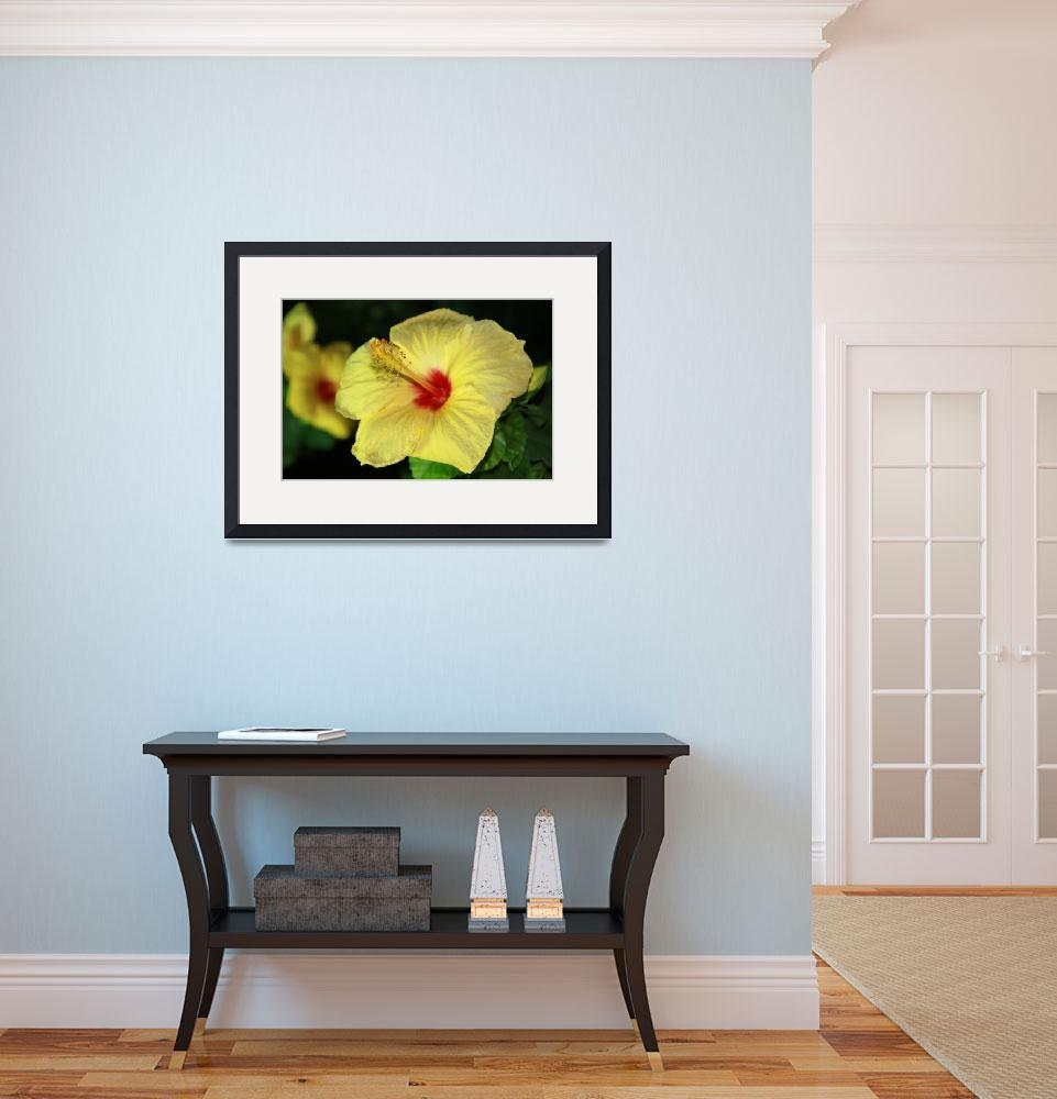 """""""Yellow Hibiscus&quot  (2010) by easyfigure"""