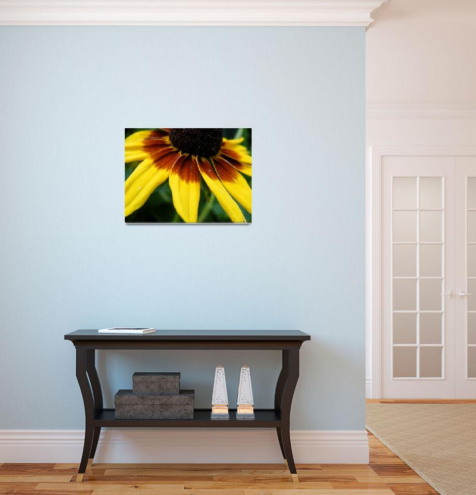 """""""Black Eyed Susan""""  (2012) by Kimmary"""