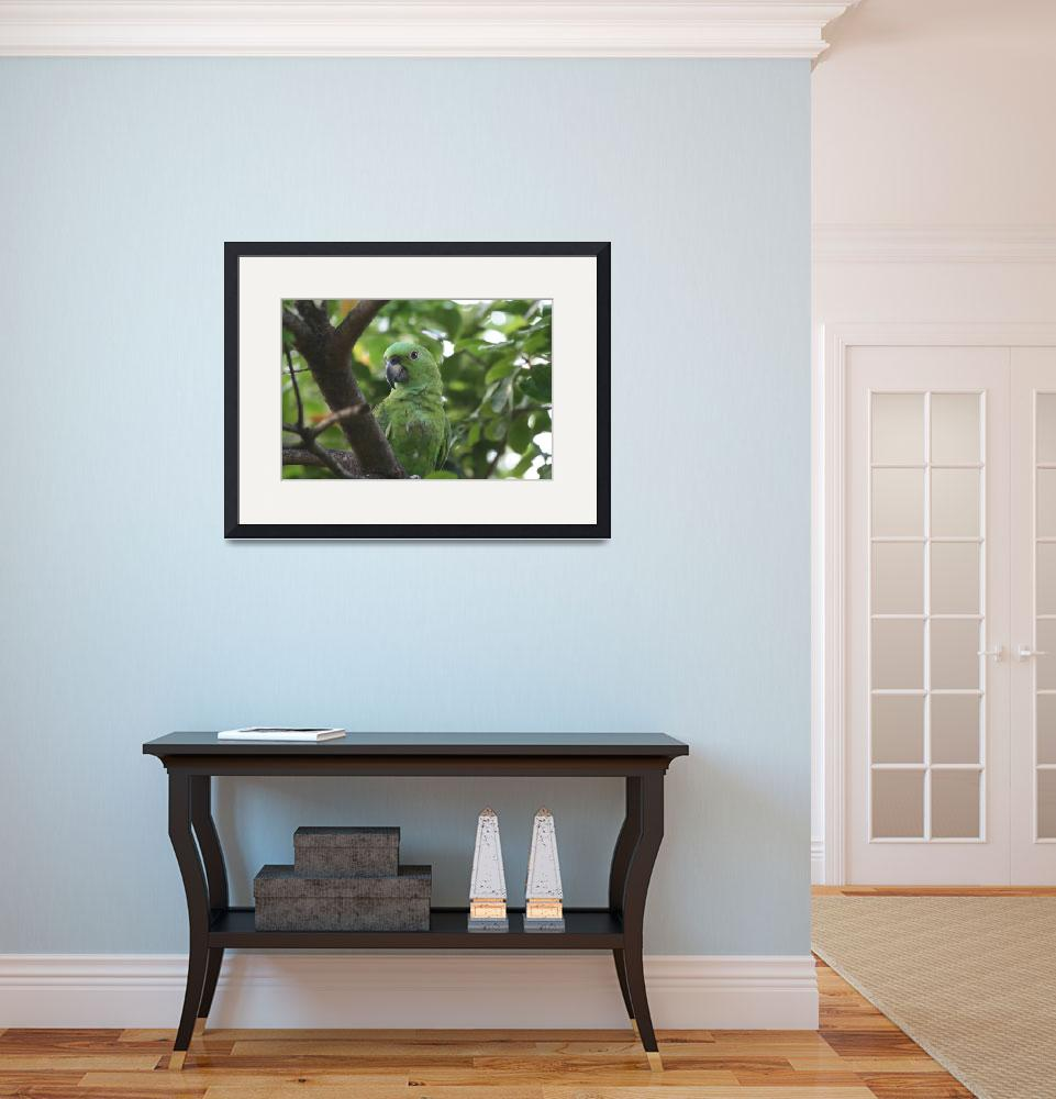 """""""Green Parrot in Tree in Costa Rica&quot  (2008) by Marajo"""