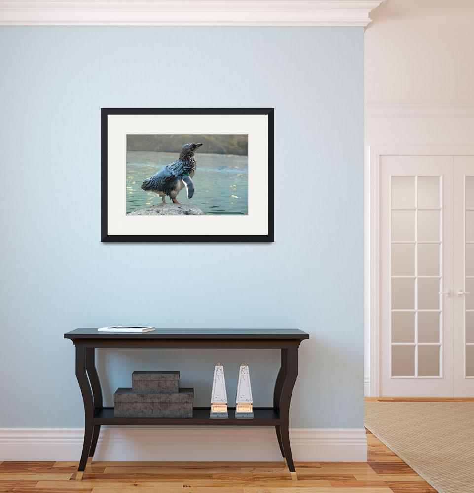 """Little Blue Penguin&quot  (2008) by stockphotos"