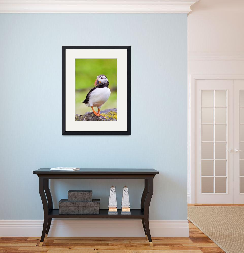 """""""Puffin""""  (2007) by Sparky2000"""