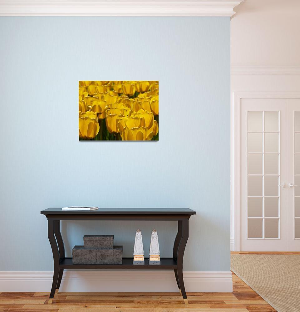 """Golden Tulip Petals""  (2008) by crazysuncompany"