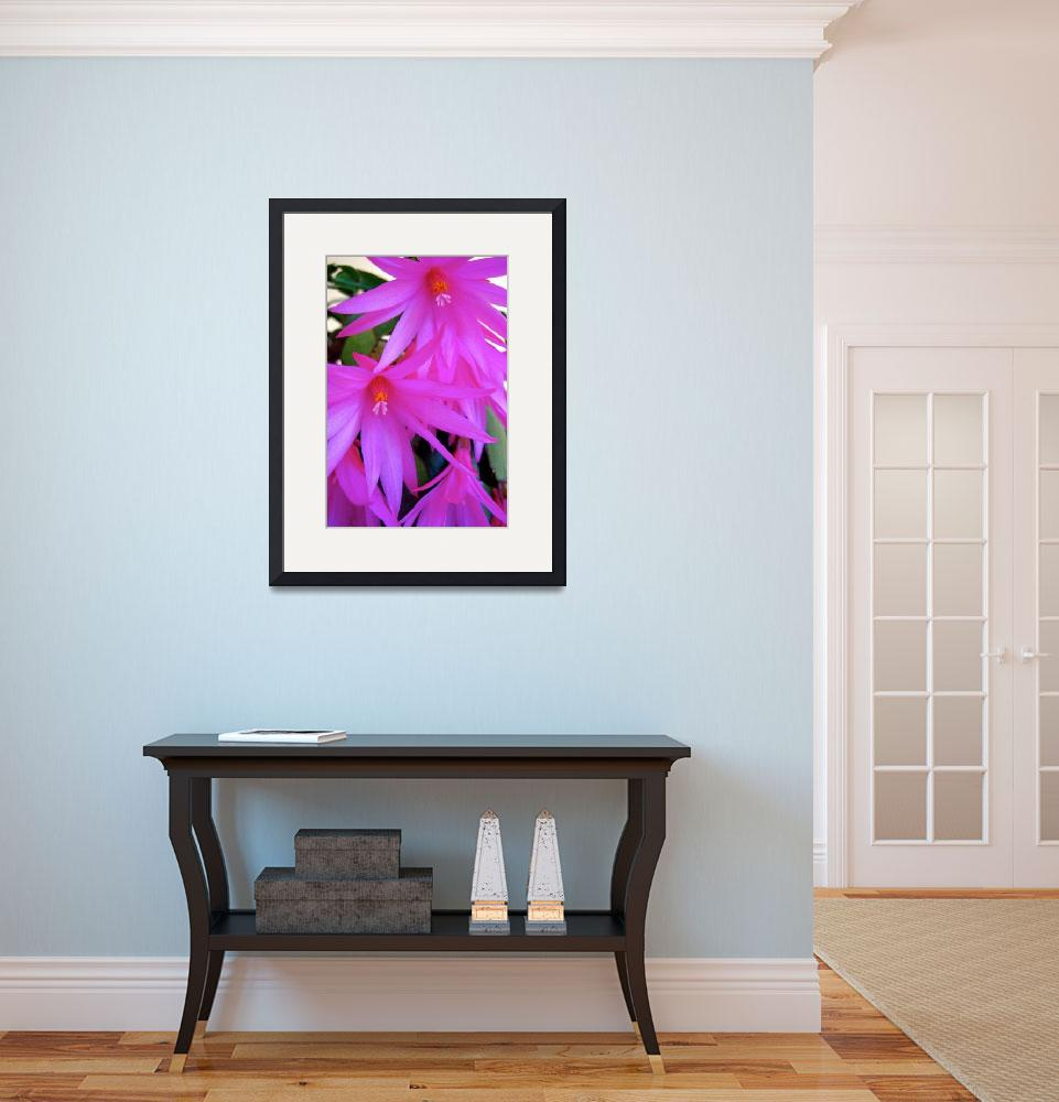 """""""Christmas Cactus""""  (2010) by EOTL"""
