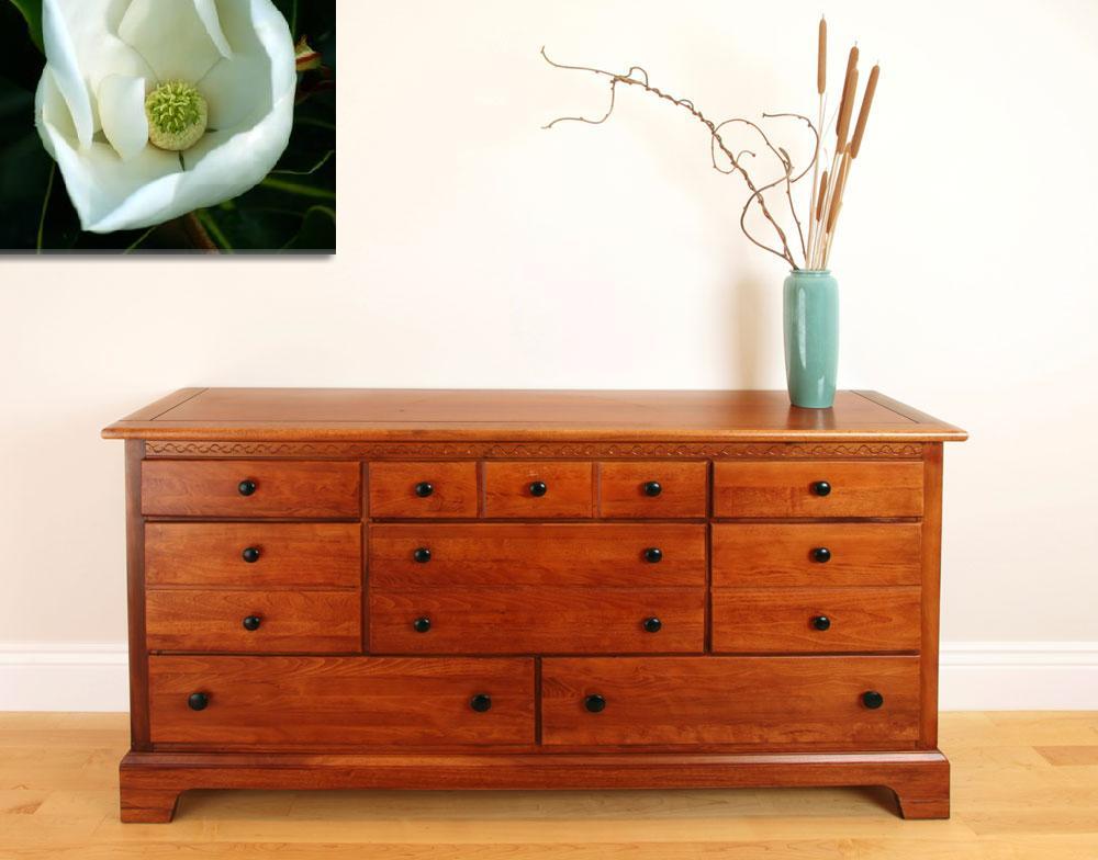 """Magnolia""  by DavidBleakley"