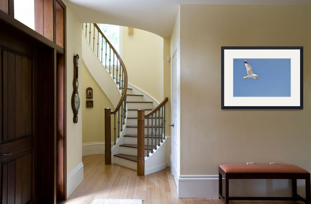 """""""White Seagull with spread wings flying against a b&quot  (2013) by creative_photography"""