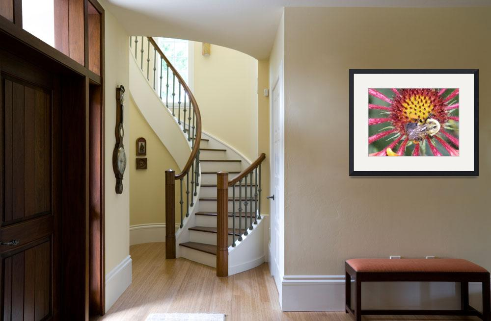 """""""bumble bee and flower art print&quot  (2010) by derekmccrea"""