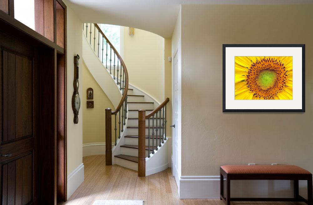 """""""Sunflower Close-up&quot  (2011) by photosbybritney"""