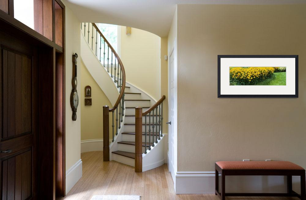 """""""Black-Eyed Susans&quot  by Panoramic_Images"""
