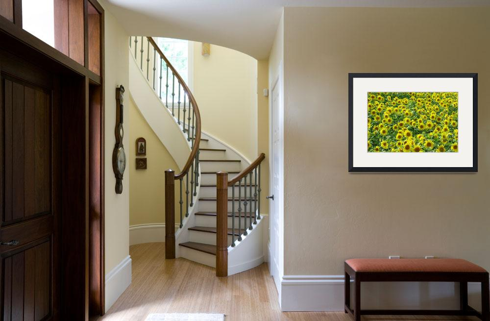 """""""Sunflowers  (14802-RD)&quot  (2007) by rodjohnson"""