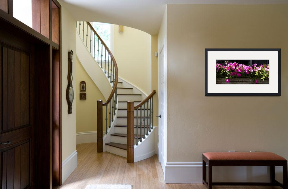 """""""Flowers in a window box&quot  by Panoramic_Images"""