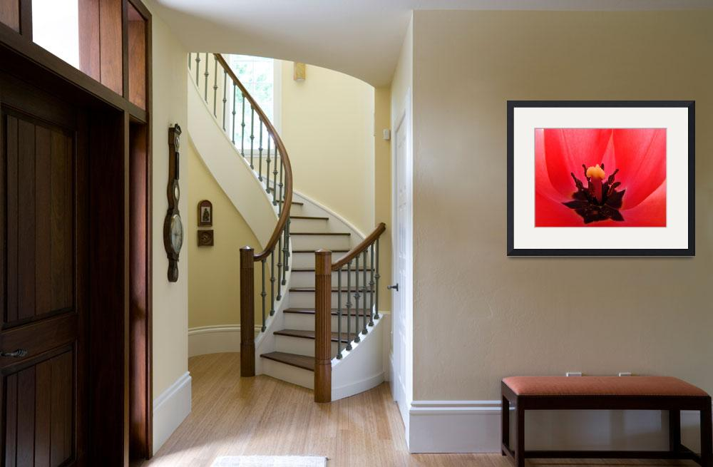 """TULIP Art Print Red Tulip Flower Giclee Baslee&quot  (2009) by BasleeTroutman"