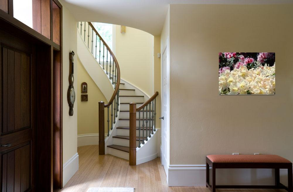 """Rhododendron Flowers Garden art Prints Yellow""  (2010) by BasleeTroutman"
