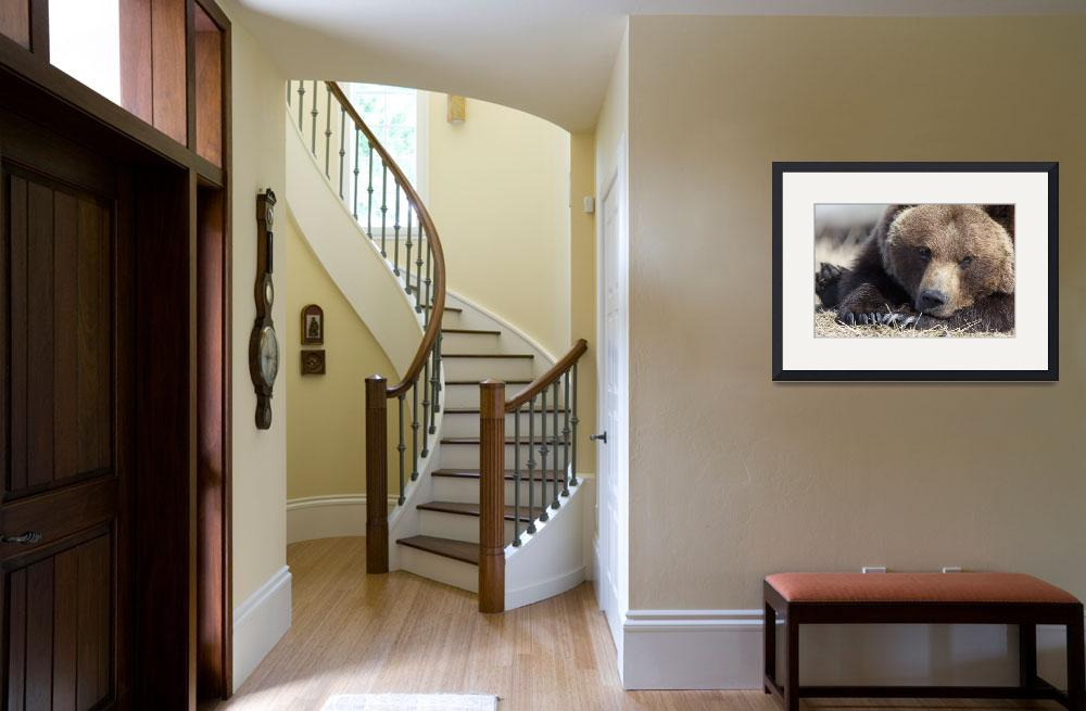 """""""Close up portait of a sleepy adult Brown bear at t""""  by DesignPics"""