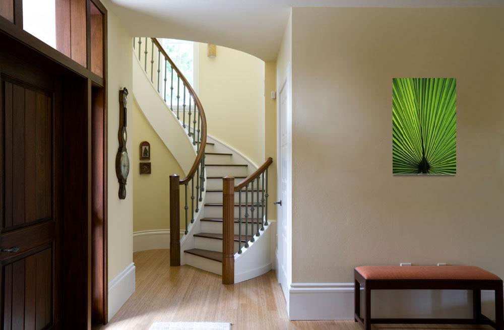 """Hawaii, Oahu, Backlit Fan Palm Leaf&quot  by DesignPics"