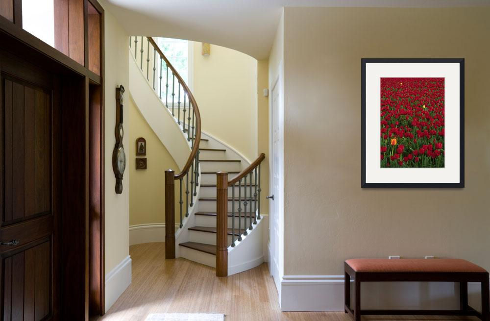 """""""Red and Yellow Tulips""""  (2004) by Inge-Johnsson"""