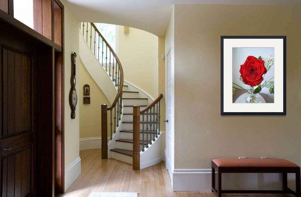 """""""May Red Rose&quot  (2011) by MAF"""