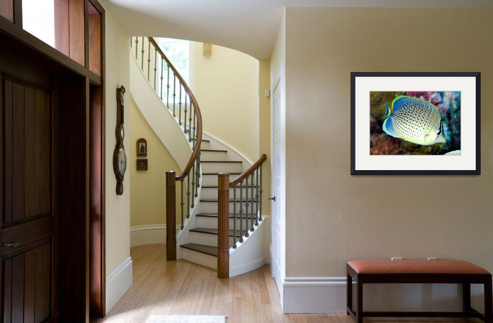 """""""Butterflyfish17-DEC-2008VR105&quot  by JoaoPonces"""