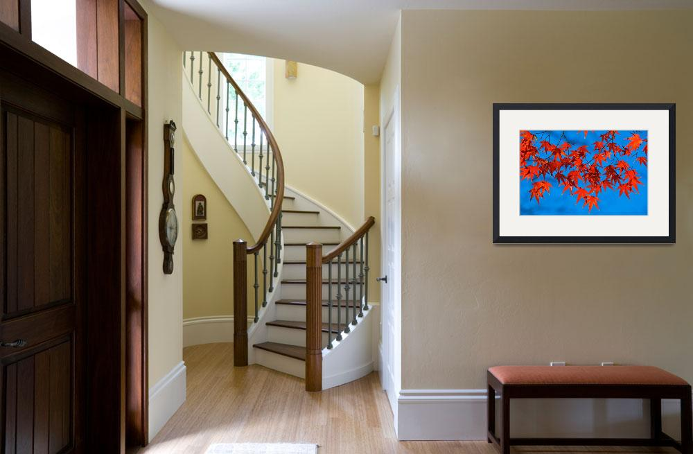 """""""Red on Blue&quot  (2008) by ImageArt-Photography"""