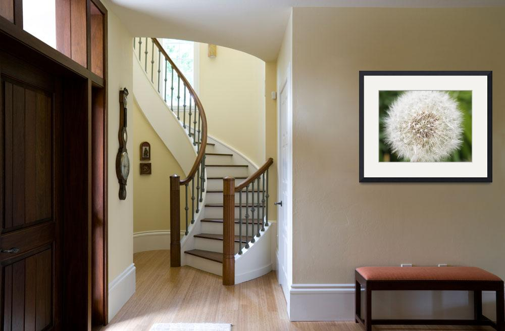 """""""dandelion seed head&quot  (2008) by nathangriffith"""