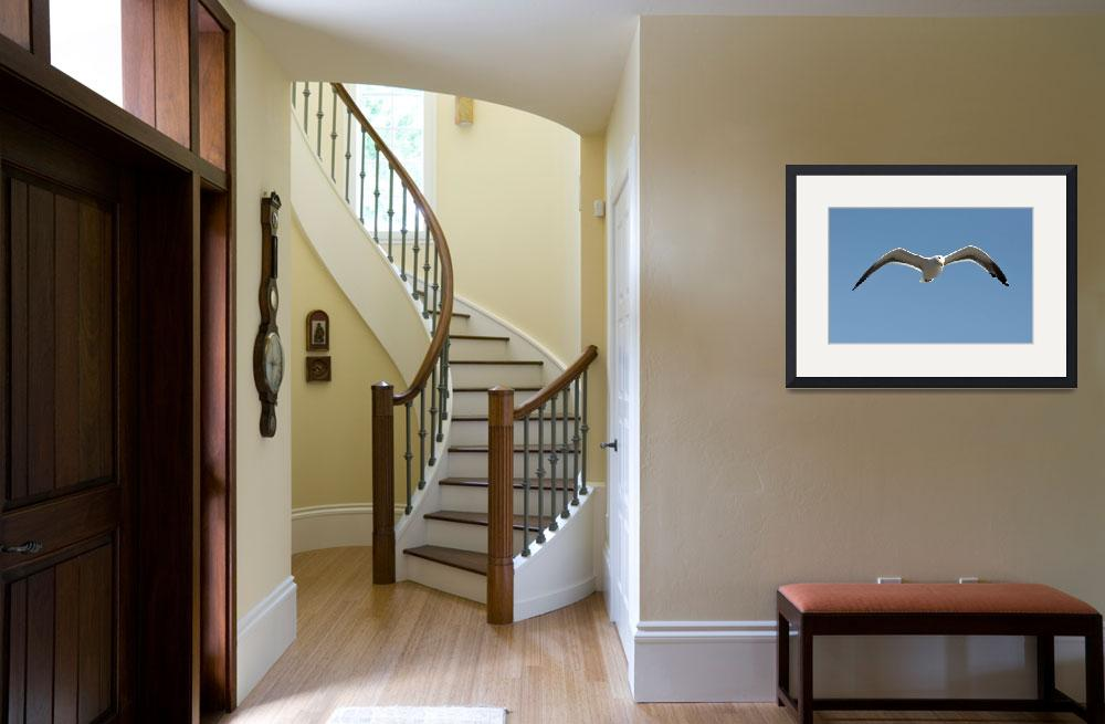 """""""Seagull in Flight""""  (2011) by RobinCowles"""