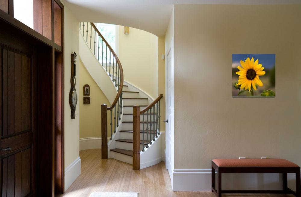 """""""Sunflower in New Mexico""""  (2008) by NjordPhotography"""