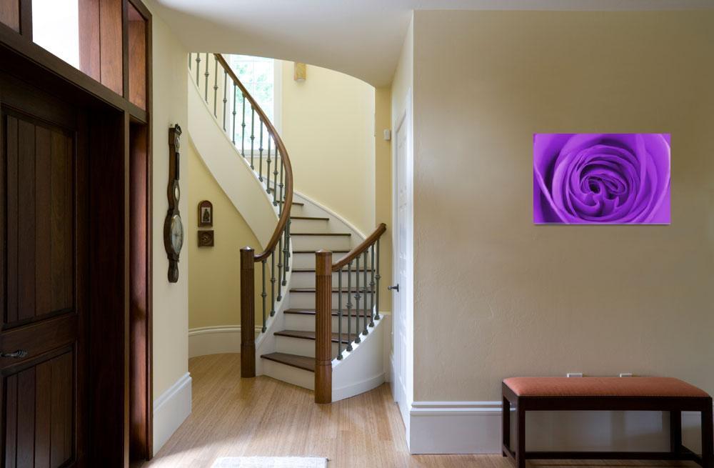 """Purple Swirl&quot  (2011) by ImageMonkey"