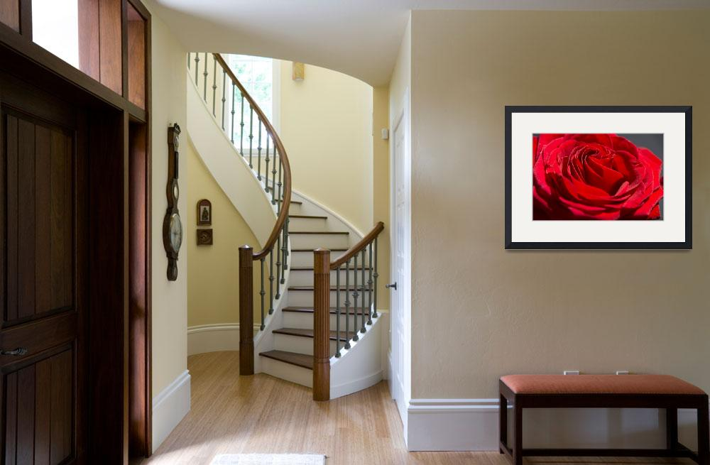 """""""Red Rose&quot  (2014) by Fraenks"""