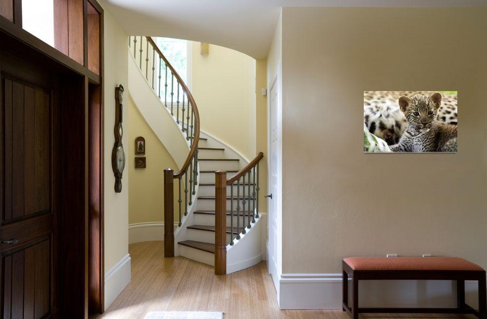 """Leopard Cub""  by MichaelPoliza"