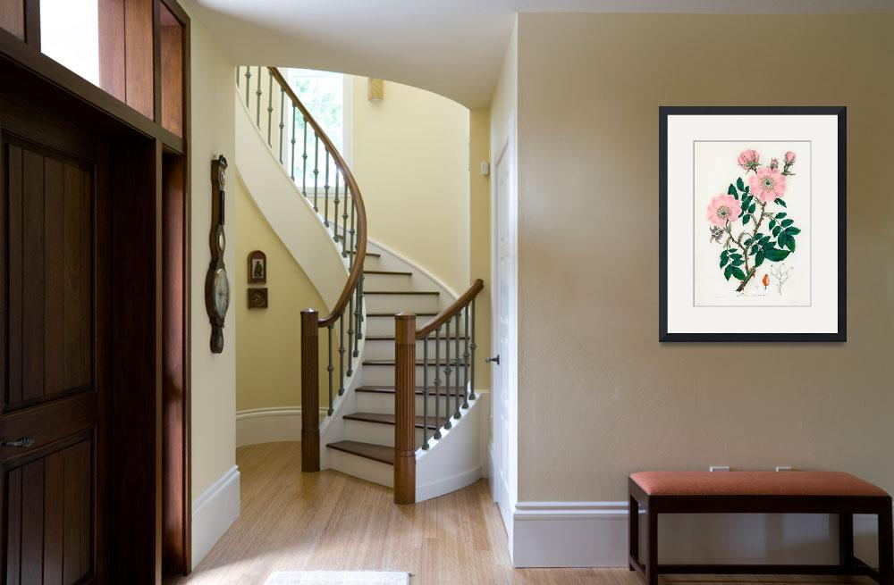 """""""Vintage Botanical Dog rose&quot  by FineArtClassics"""