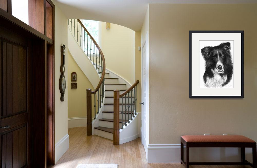 """Memorial Portrait of Malcolm, Border Collie&quot  (2007) by sdonley"