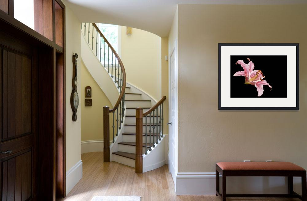 """Pink Lily Floating&quot  (2007) by ToddMortonPhotography"