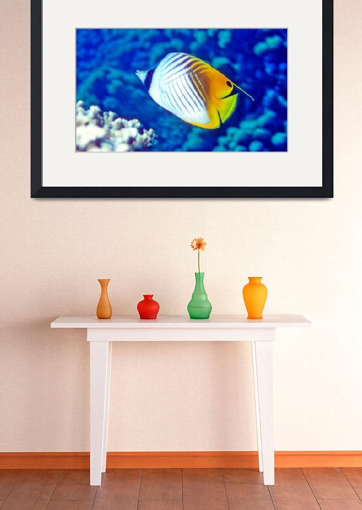"""""""Threadfin Butterflyfish""""  (1991) by JoaoPonces"""