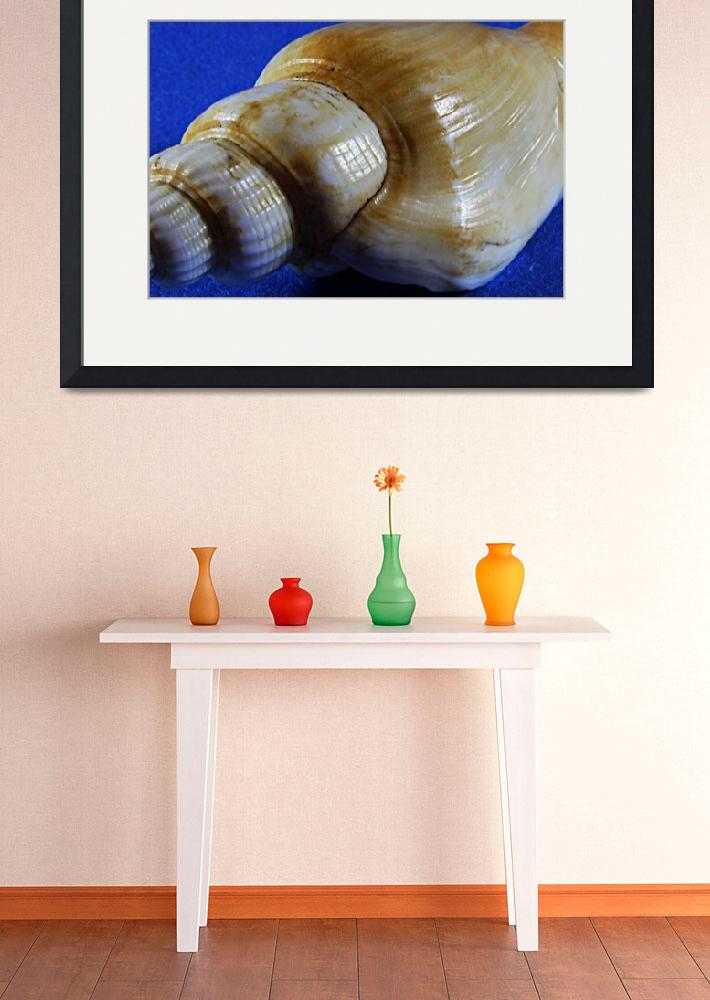 """""""Shell on Blue""""  (2014) by Glorfindel"""