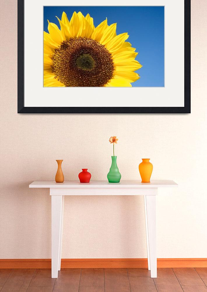 """Sunflower""  (2006) by bkindler"
