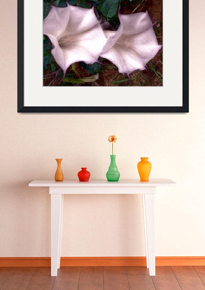 """""""Dazzled by Datura: Capital Reef National Park&quot  by Mylene"""