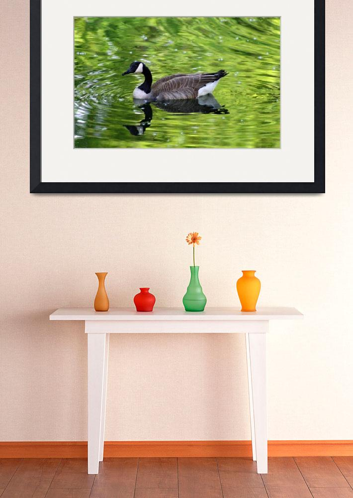 """Canada Goose in Green Water&quot  (2012) by KsWorldArt"