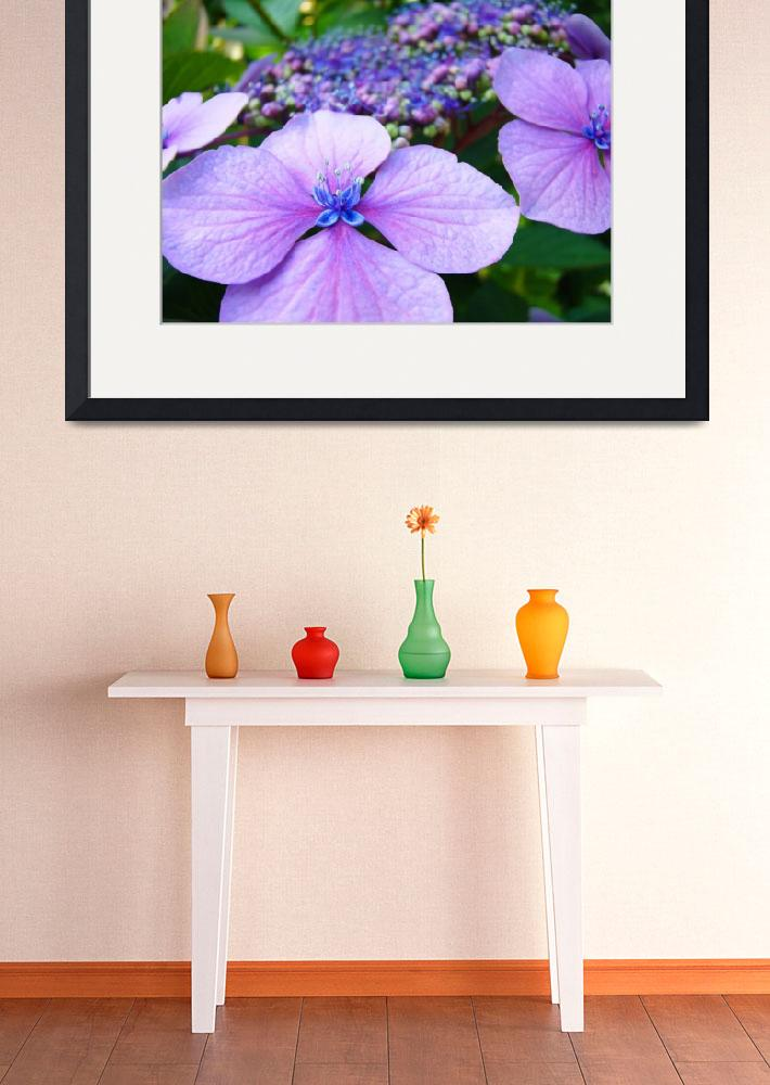 """Hydrangea FLOWERS Pink Purple Blue Botanical Art&quot  (2009) by BasleeTroutman"