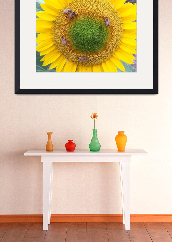 """""""Sunflower with Bees&quot  (2010) by longdistgramma"""