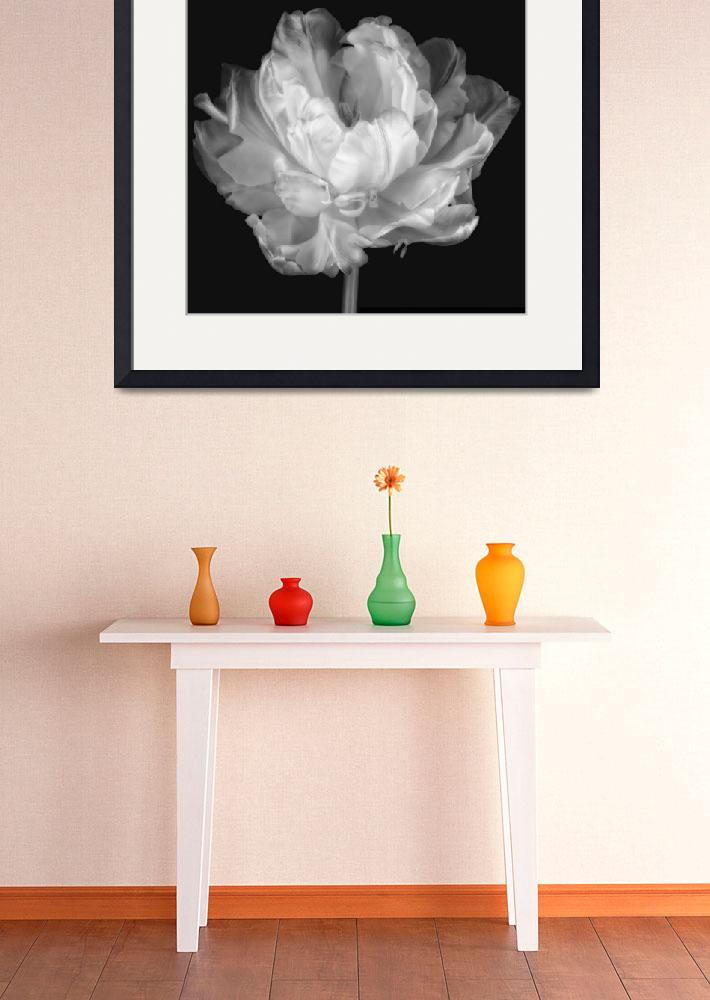 """White Double Tulip&quot  (2012) by CoraNiele"
