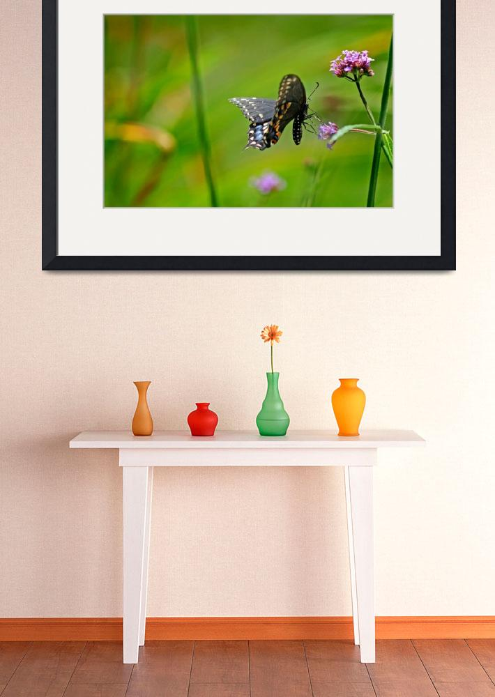 """Butterfly   Black Swallowtail&quot  (2010) by KsWorldArt"