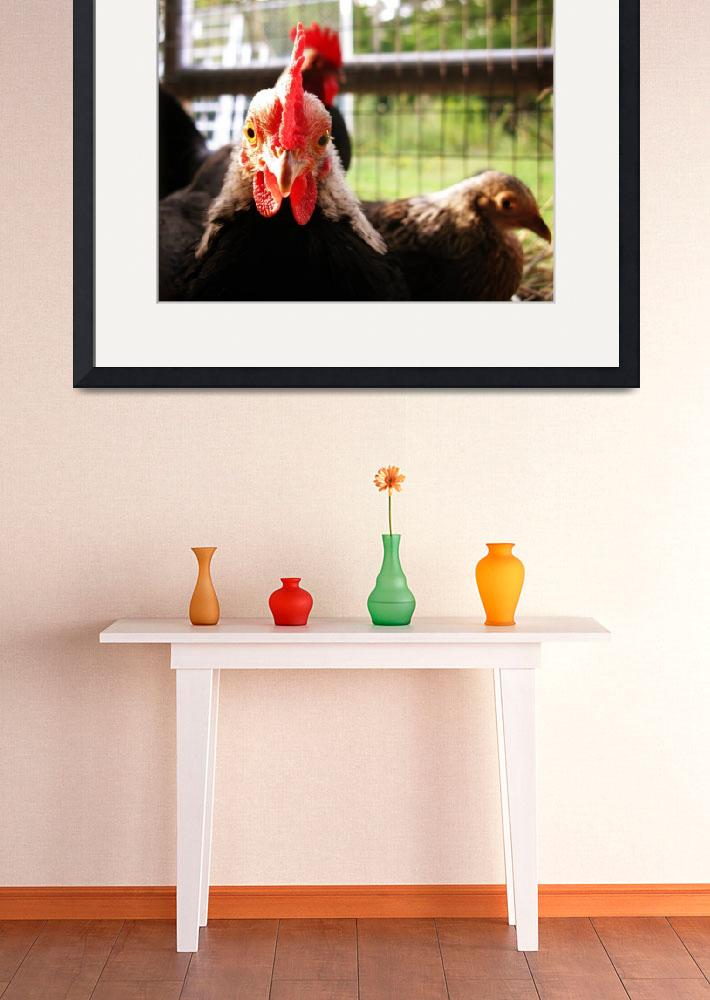 """""""Fair Rooster""""  (2009) by strawberrygoldie"""