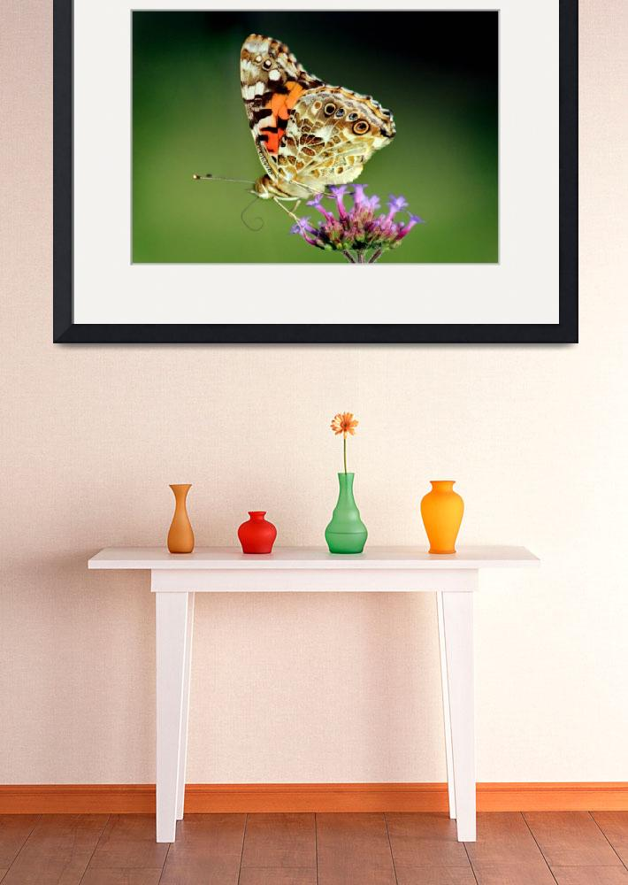"""""""American Painted Lady Butterfly on Green 2014&quot  (2014) by KsWorldArt"""