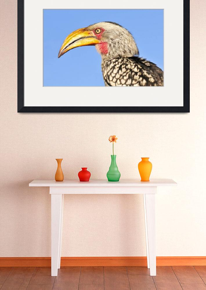 """""""WCC_1900- Yellow-billed Hornbill Portrait&quot  (2015) by photocell"""